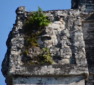 Guatemala 10_11